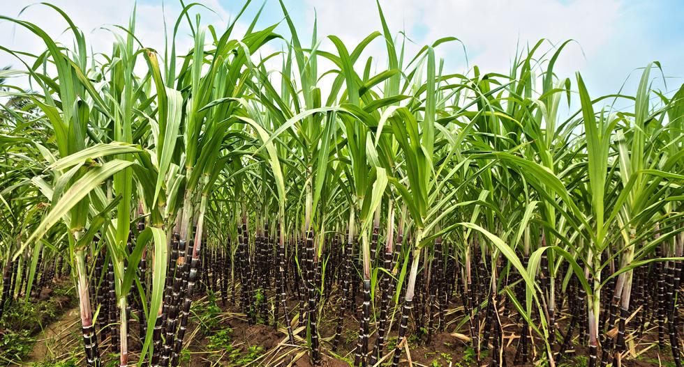 Incidencia e Importancia del FEPA Sobre Productores y Consumidores de Azúcar en Colombia